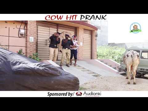 COW HIT PRANK