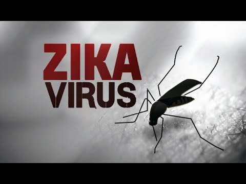 Video Top 5 Remedies To Treat Zika Virus