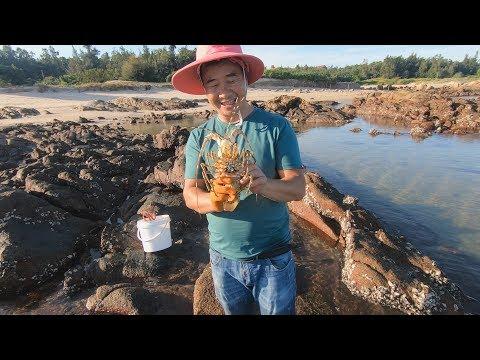 台风后海鲜都出来呼吸,竟给玉平抓到中国大龙虾,海螺都有拳头大