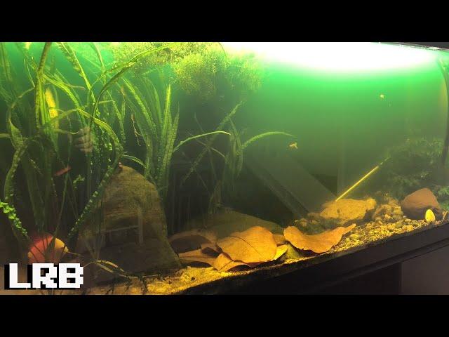 What Happened to the New Discus QT Aquarium