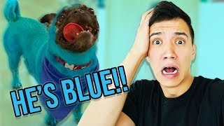 MY BROTHER TURNED MY DOG BLUE