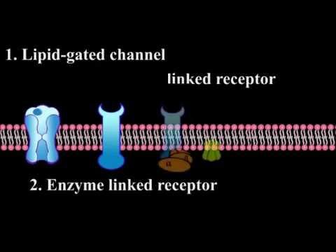 Как определить по калу паразитов в организме