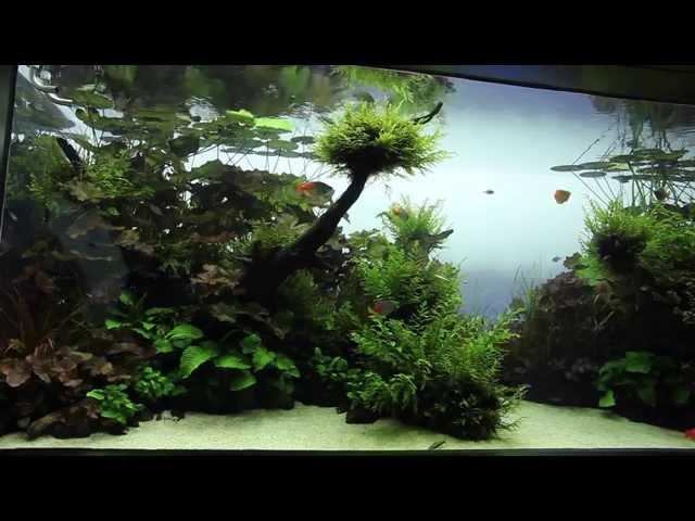 Visite   Live planted Aquarium - Aquascape par Aqua Design Amano