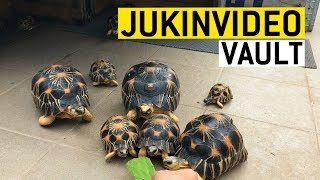 animales Video con reptiles