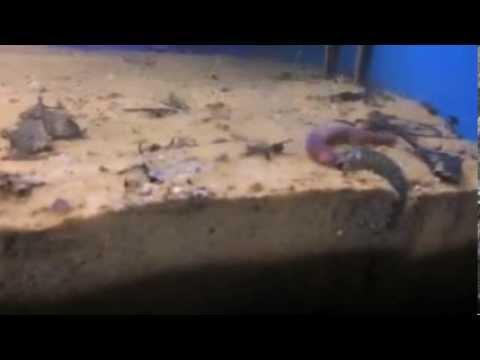 Ano ang mga pagsusulit para sa mga worm