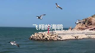 preview picture of video '烟台  yantai 山东 长岛 chinese city  Shandong家乡长岛 好玩的地方 Where is the fun of Shandong China [2018]'