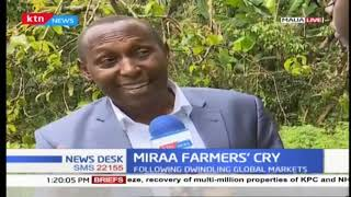 Miraa farmers' cry: Miraa research centers to beestablished