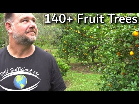 , title : 'EVERY Fruit Tree We're Growing Full Garden Tour