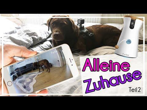Hund mit Kamera alleine Zuhause | was passiert? Furbo und GoPro ♡ Milka Mittwoch  ♡  KaroLovesMilka