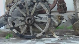 Собака-Спинопочесака