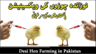 Poultry farming in Pakistan | Make Money - from Poultry