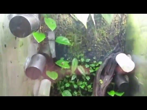 Poison dart frog room