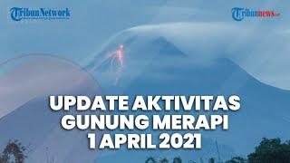 LIVE Aktivitas Terkini Gunung Merapi Kamis 1 April 2021