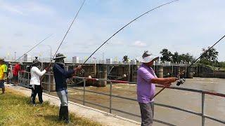 เลาะเที่ยวชมบรรยากาศเขื่อนราษีไศล ดูเขาตกปลากัน   Amazing Fishing Big Fish   Vlog