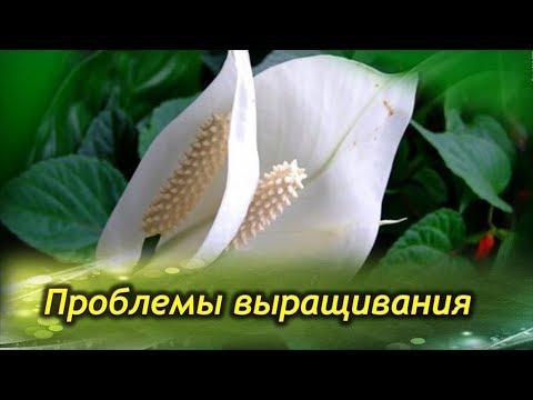 Песня гр весна формула счастья