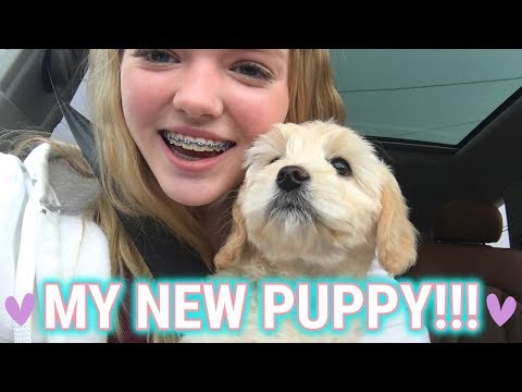 MY NEW PUPPY!!! || Picking Up My Labradoodle Puppy