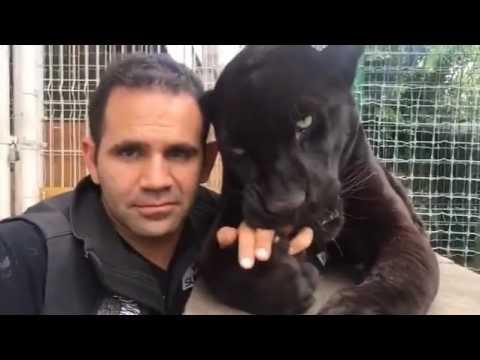 OMG, the black jaguar