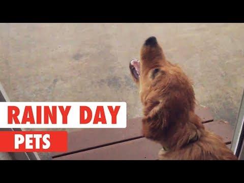 חיות מחמד חמודות בגשם