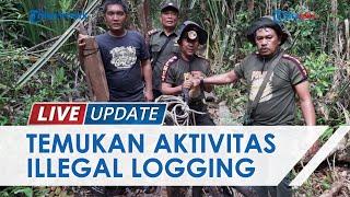 BKSDA Riau Patroli di Suaka Margasatwa Kerumutan, Temukan 44 Kubik Kayu Ilegal Logging Siap Angkut