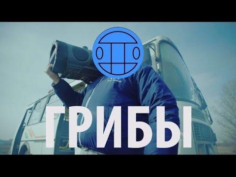 В Украине клип группы «Грибы» стал самым популярным музыкальным роликом на YouTube