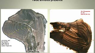 Maxilla section quality development 2017 audio