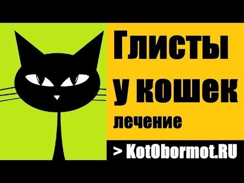 Глисты у кошек — лечение