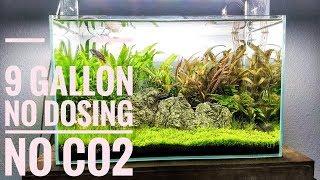 Low-tech bez CO2, bez nawozów, bez ogrzewania