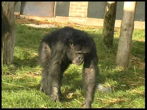 Love Your Zoo 2012: Charlotte Macdonald, Curator of Animals and Wildlife - Twycross Zoo