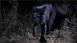 Phát hiện con vật quý hiếm trong truyền thuyết, 100 năm mới thấy một lần.