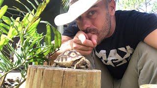 Little Tortoises, Giant Tortoises!!!!