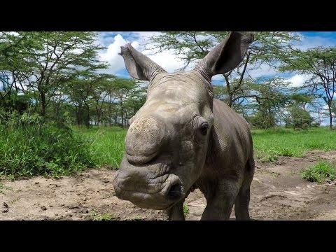 GoPro Cause: Last of the Rhinos – Baby Ringo