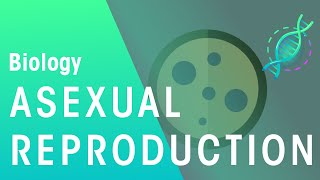 What Is Asexual Reproduction | Genetics | Biology | FuseSchool