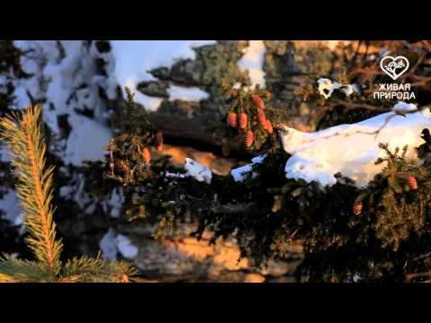 Гора Малый Ямантау. Башкирия. Часть 3.