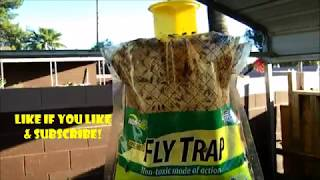 Rescue fly-trap-BEST FLY-TRAP EVER!!!- SET-UP AND RESULT
