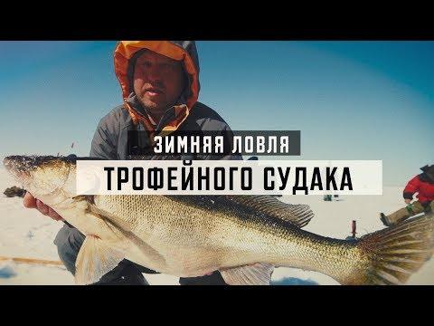Зимняя ловля трофейного судака на вибы