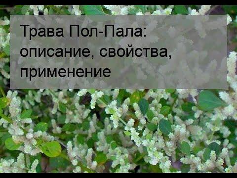 Трава Пол-Пала: описание, свойства, применение