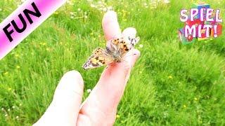 Schmetterlinge freilassen   Distelfalter fliegen davon   Auf Wiedersehen kleine Raupen