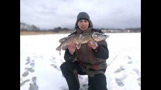 Рыбалка чудское озеро отчеты о рыбалке