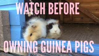 A BEGINNERS GUIDE TO GUINEA PIG CARE | Furry Friends