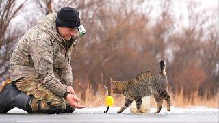 Как ко мне на рыбалке пришел КОТ)) Жерлицы на щуку. Январские приключения.