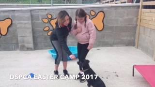 All prepared for tomorrow's Dublin SPCA Easter Camp