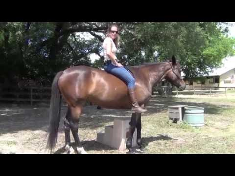 Tao Method Course 1 Riding as One HB - YouTube