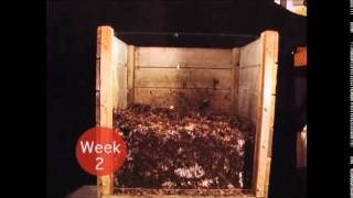 Compost Time-Lapse