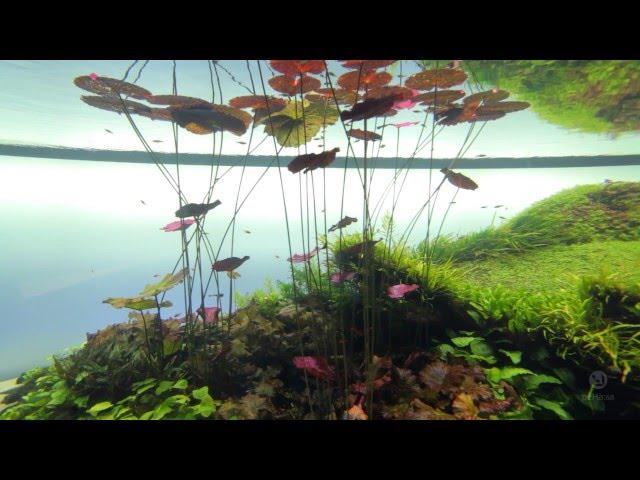 Forest Underwater by Takashi Amano