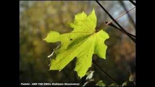 Video AND THE END(s Ondřejem Skoumalem) - Podzim