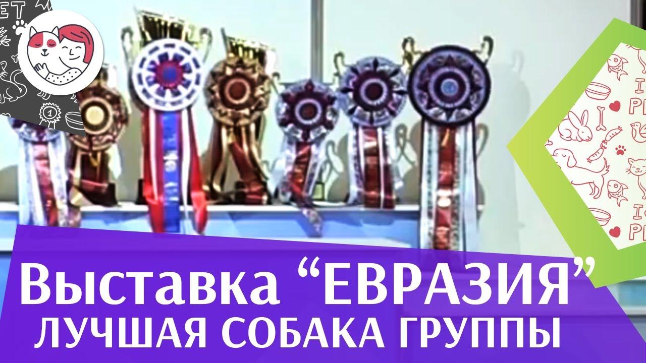 Лучшая собака 8 группы по классификации FCI 19 03 17 на Евразии ilikepet