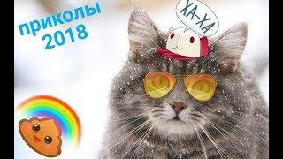 ПРИКОЛЫ ПРО ЖИВОТНЫХ 2018/СМЕШНЫЕ КОТЫ И СОБАКИ/приколы 2018