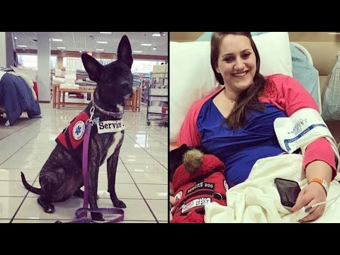 Rude Kid Hits Service Dog and Owner Teaches Her a Lesson She Won't Forget