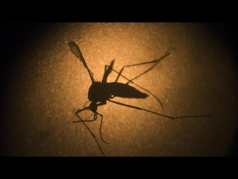 Asian tiger mosquito again identified in Wayne County