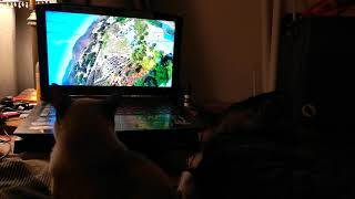 Cat loves watching my DJI FPV VIDEOS
